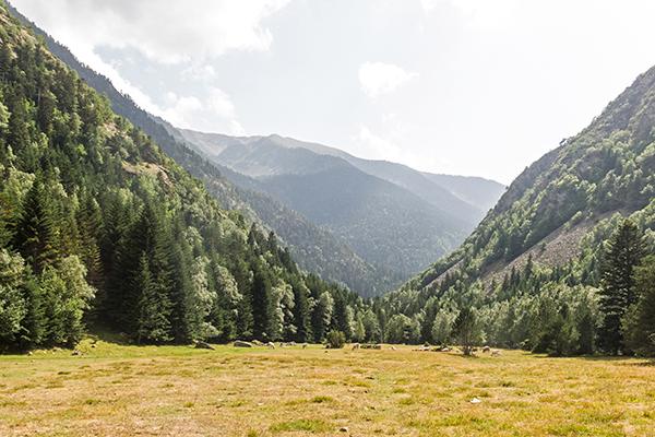 bosques-pierden-capacidad