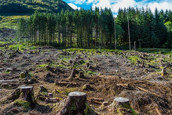 proteccion-bosques
