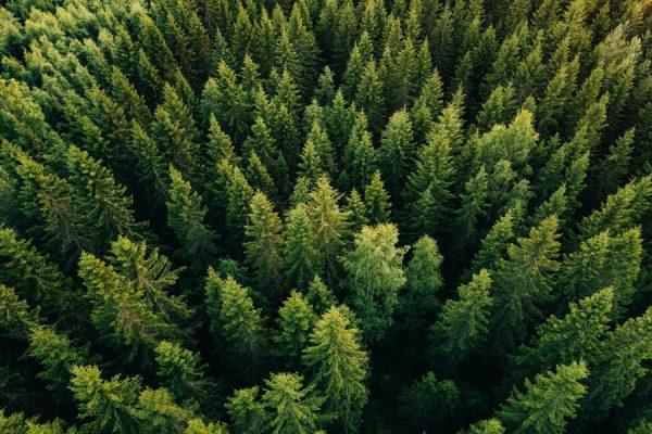 uninimex-bosque