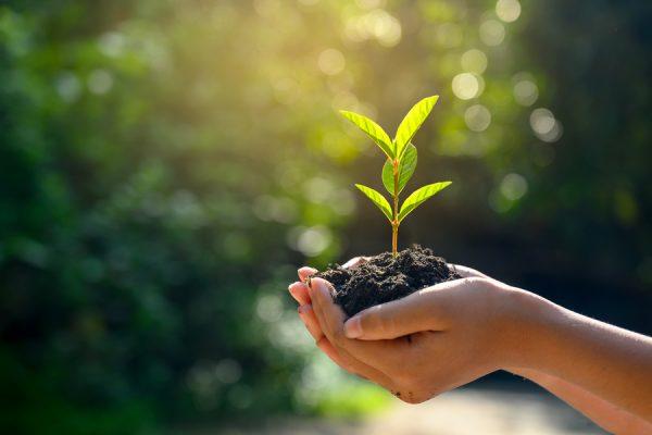 uninimex-medio-ambiente-sostenibilidad