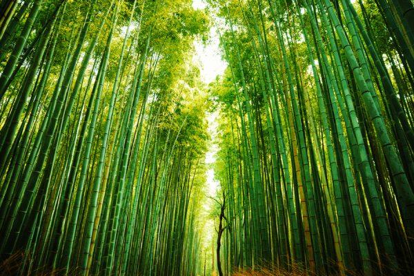 uninimex-bambú-sustitución-plástico