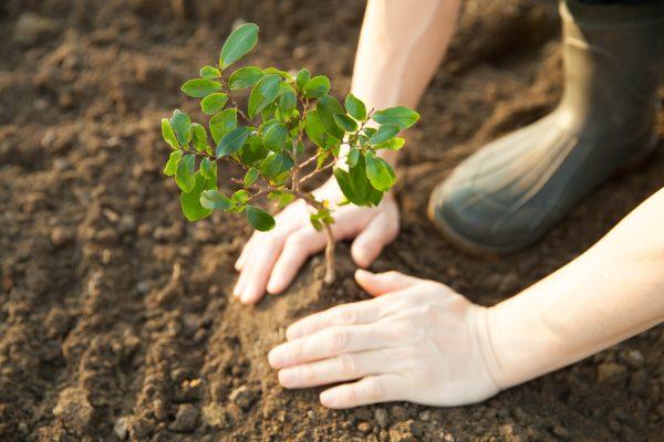 reforestum-uno
